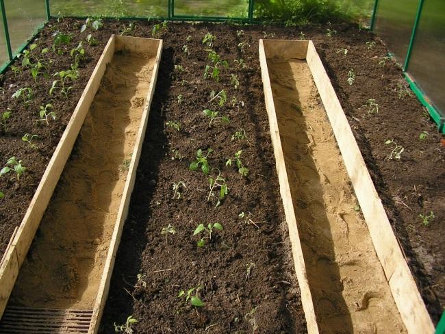 Частично качество урожая зависит от месторасположения грядок в теплице
