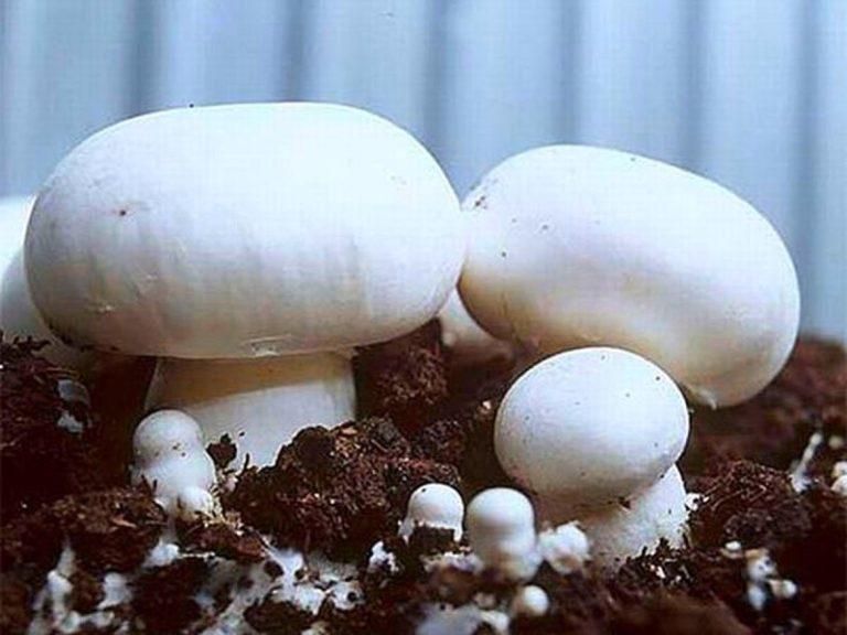 Чтобы выращивать грибы круглый год, нужно позаботиться об отоплении теплицы