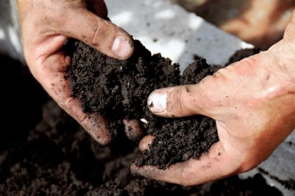 Когда садовод видит, что его земля истощена, ему приходится применять удобрение