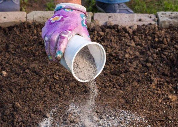 Если причиной появления мха в теплице служит слишком высокий уровень кислотности почвы, то его необходимо снизить с помощью древесной золы