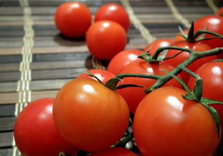 Раннеспелый овощ способен порадовать первыми спелыми плодами через 100 дней после всходов рассады