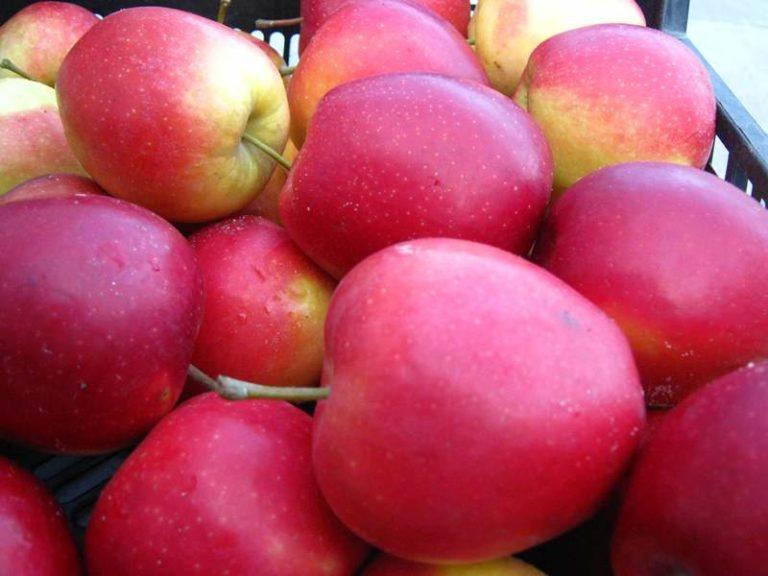Огромным плюсом является трехкратное превышение срока хранения относительно обычных яблок и помидоров