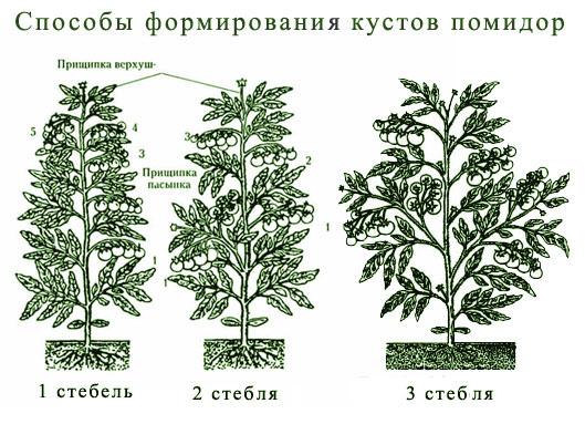 Формировать куст необходимо в 1 или 2 стебля