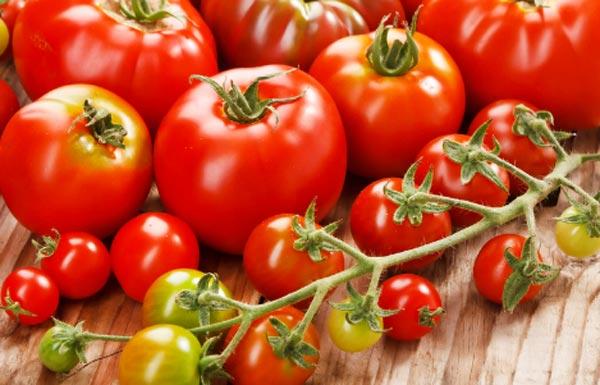 Своевременная и правильная подкормка помидор напрямую влияет на устойчивость томатов к заболеваниям и на качество и количество урожая