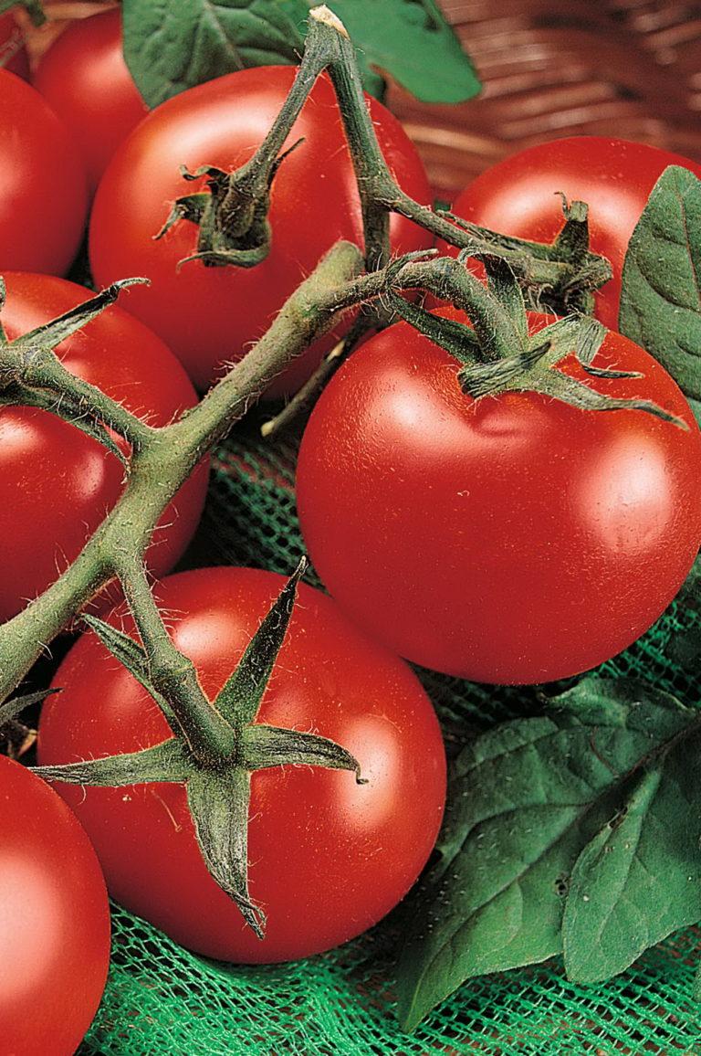 Мякоть у помидоров Раджа мясистая и сочная, а вкус — сладковатый