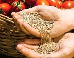 Подобрать подходящий вид семян очень важно