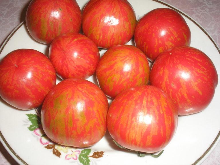У помидоров Рябчик хорошая устойчивость к растрескиванию