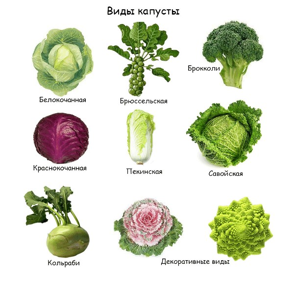 Блюда из тофу рецепты с фото на RussianFoodcom 202