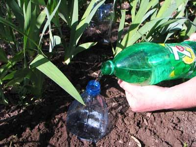 Чтобы из-за повышенной влажности воздуха растения не болели, опытные садоводы практикуют полив помидоров бутылками