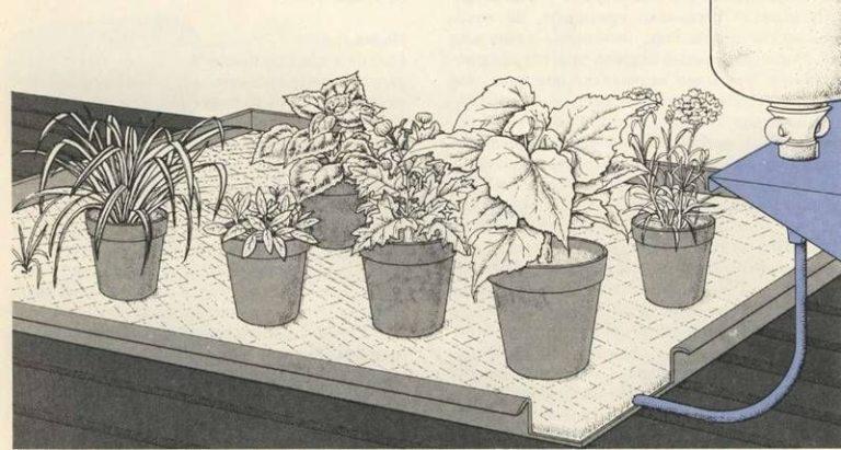 К корням каждого растения вода подается через тонкую трубочку, которую называют капилляром