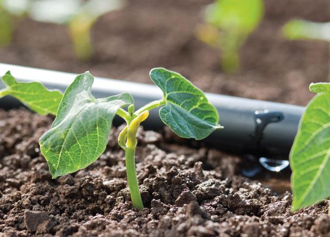 При этом методе значительно уменьшается расход воды или жидких минеральных удобрений, так как они строго направленно поступают к выращиваемым растениям