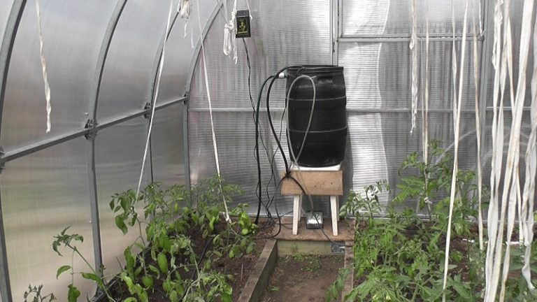 Автоматический капельный полив в теплице является наиболее эффективным