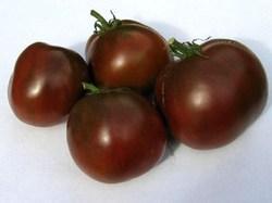 Этот интересный и весьма необычный сорт помидоров без преувеличения можно считать настоящей находкой для дачников и огородников
