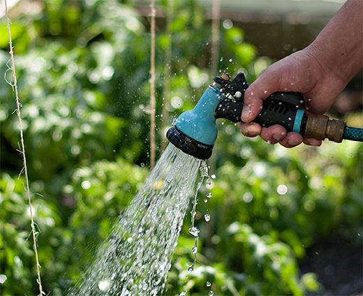 Арбузы хорошо растут только при достаточном количестве воды