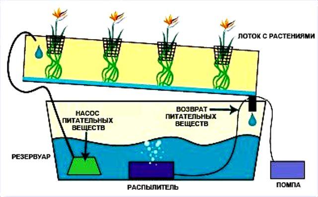 Субстрат все время циркулирует по коробам, из которых он и попадает к растениям. При этом саженцы клубники высаживаются в стаканчики и напрямую не контактируют с раствором