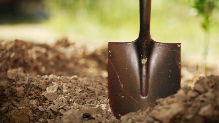 Садовая земляника не слишком требовательна к почве, но замечено, что лучше она растет и плодоносит на черноземах, удобренных золой