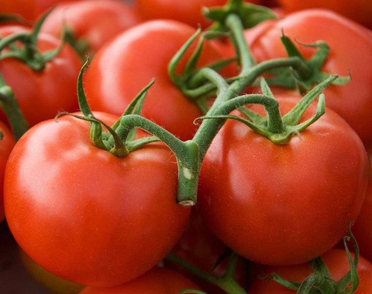 Высокая урожайность культуры и неприхотливость - это самый основной показатель для томата