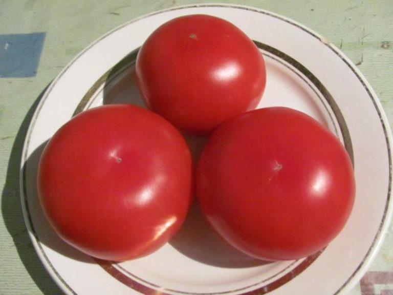 Плоды имеют полностью округлую форму