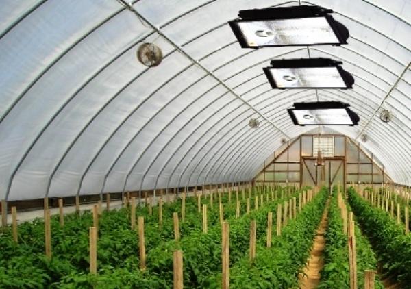 Искусственное освещение позволит пользоваться теплицей и выращивать в ней рассаду круглый год, не боясь морозов и недостатка солнечного тепла или света