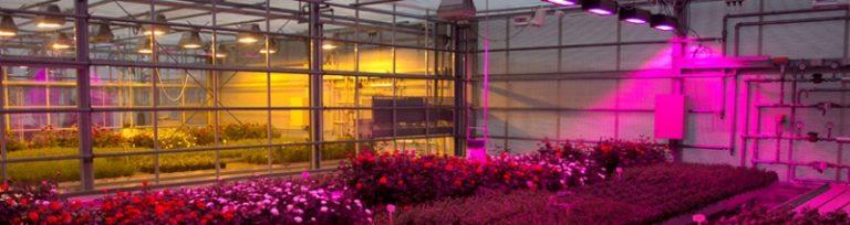 Светодиодная лампа для теплиц — самый экономный вариант, который наполнит конструкцию из поликарбоната полезным излучением сине-красного спектра
