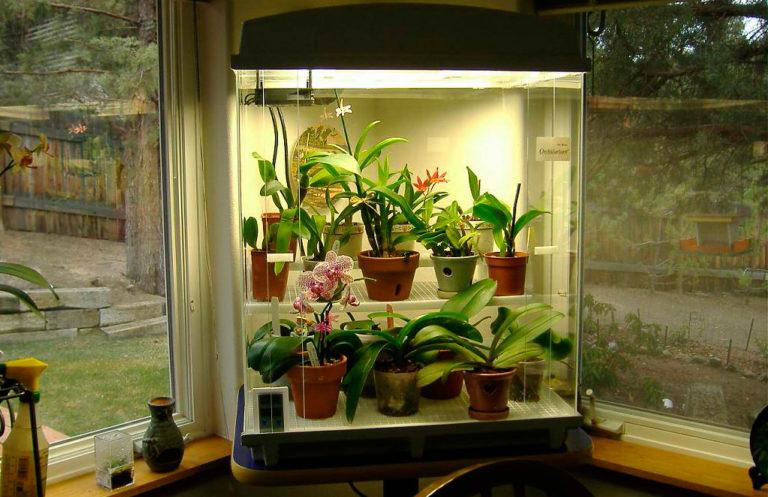 Освещение в любом случае должно быть достаточным для того типа растений, что вы выбрали, поэтому позаботьтесь о нем