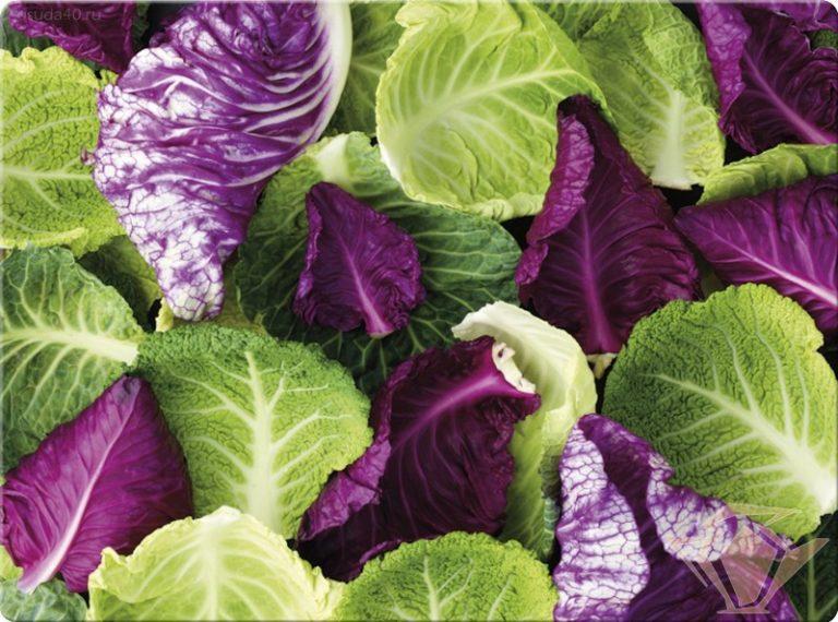У кого салат всегда на столе, отличаются отменным здоровьем