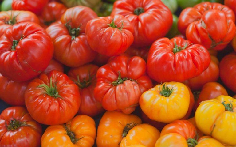 Крупные томаты с плотной мякотью светло-желтых сортов считаются наиболее уязвимыми к появлению таких дефектов
