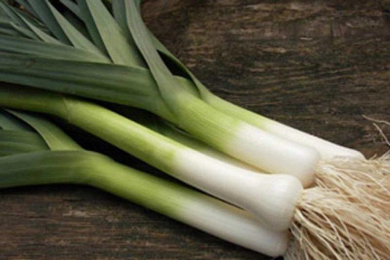 Лук порей является овощем, привезенным из Cредиземноморья