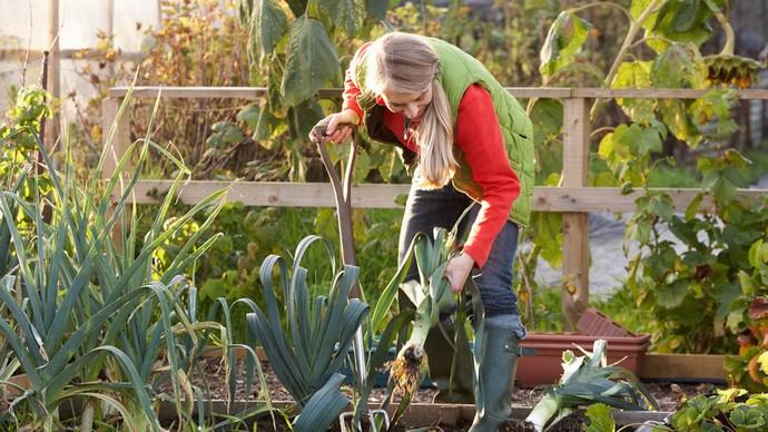В Уральском климате все немного запаздывает, но у грамотного огородника урожай бывает таким, какой и не снился в южных регионах