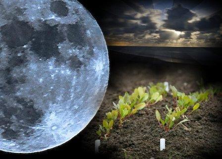 Лунный календарь посадки растений в 2017 году