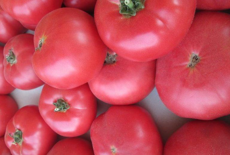 Томат включают в состав диетического питания, из него готовят маринады, соусы, кетчупы. Розовые томаты содержат больше полезных веществ, нежели привычные нам красные