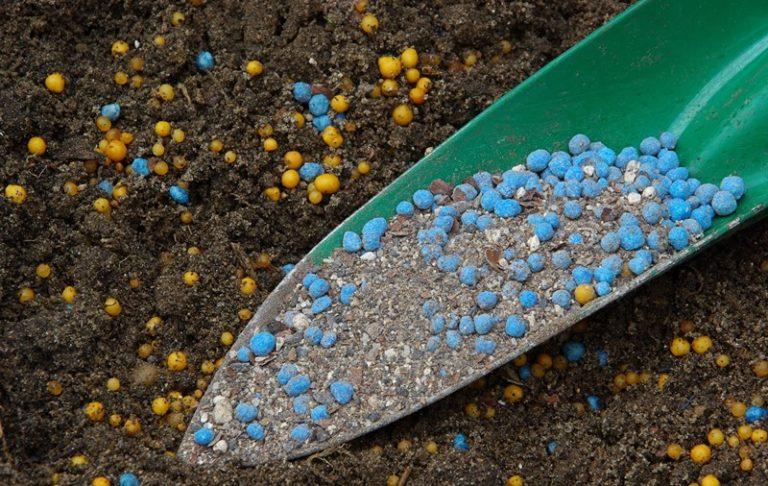Для нормального развития помидорам необходимы макроэлементы: больше всего калия, кальция, азота и фосфора