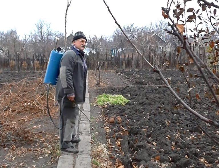 Обрабатывать почву медным купоросом с целью ее дезинфекции можно как осенью, так и весной