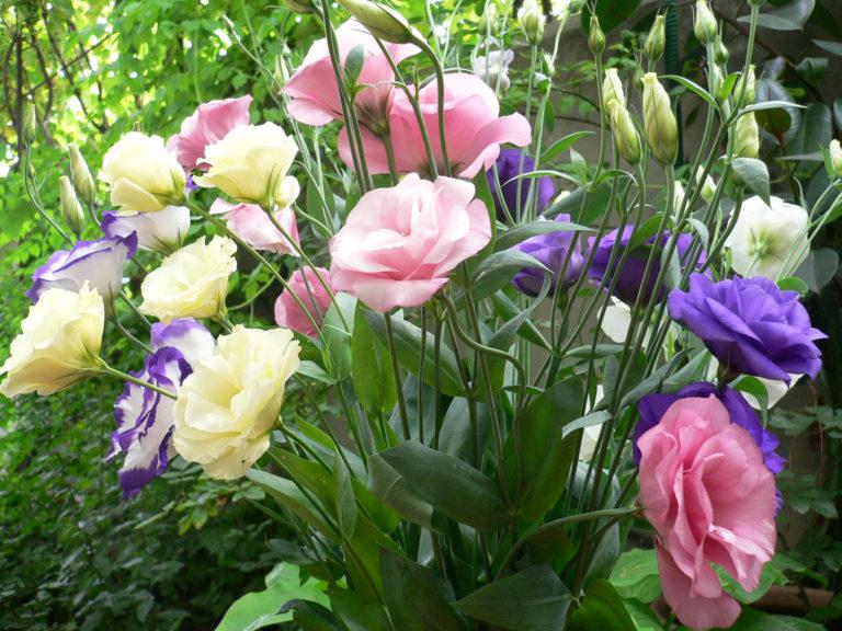 Цветы могут быть самой разной окраски