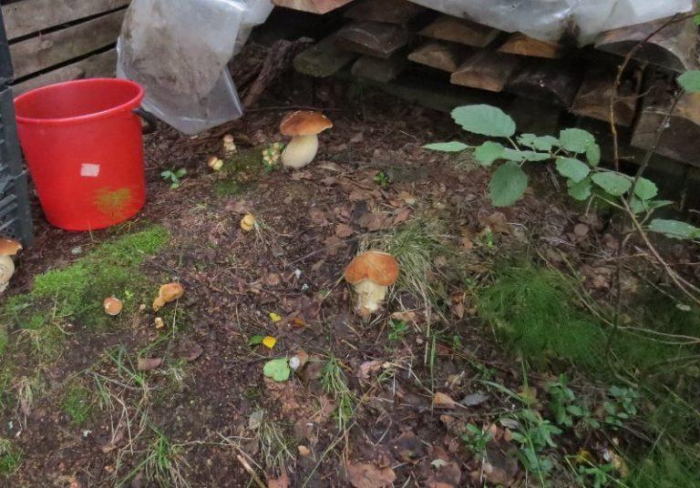 Ваш кусочек леса с грибами