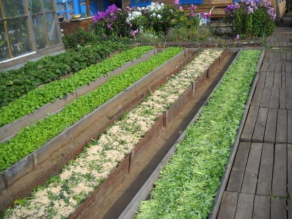 Схема Митлайдера, которая решает практически все проблемы огородников