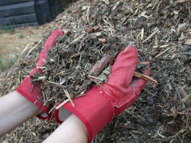 Слой мульчи удерживает влагу в почве, тем самым сохраняет ее в надлежащем количестве