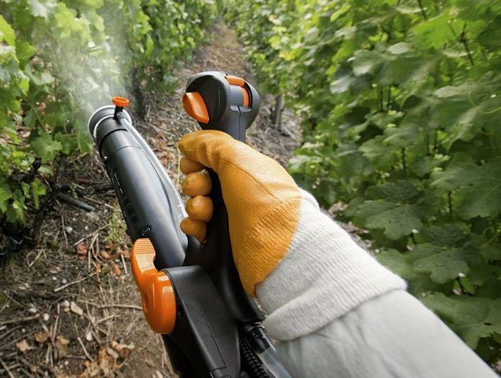 Если вы желаете, чтобы муравьи в теплице исчезли в кротчайшие сроки, рекомендуется прибегнуть к помощи средств химического характера