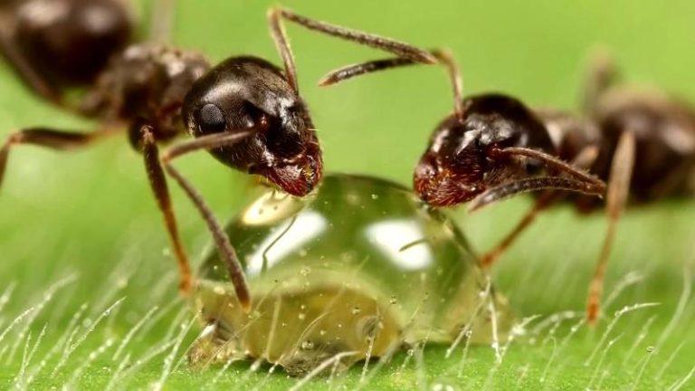 Применение химии — очень действенный метод в борьбе с надоедливыми насекомыми