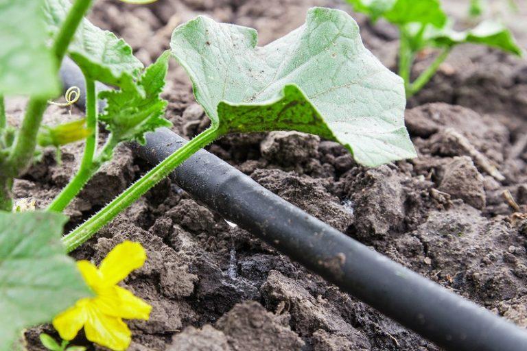Правило, которое нужно соблюдать при разведении огурцов в теплице, — обеспечение оптимальной температуры воды для полива