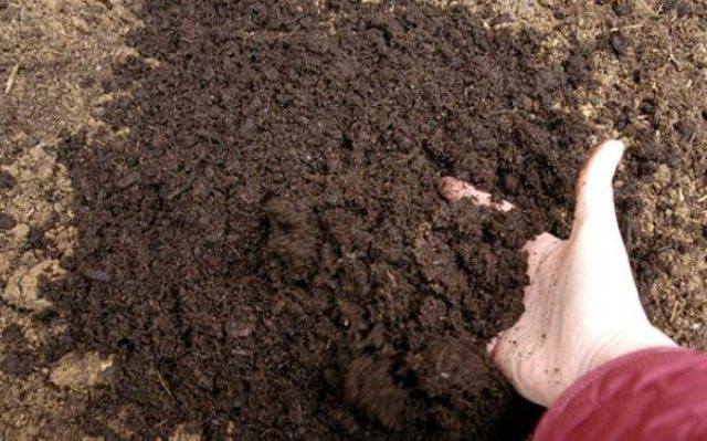 Все дело в том, что ряд грибков и болезнетворных бактерий, которые присутствуют в почве, находясь в тепличных условиях, начинают бурно развиться, поражая здоровые растения