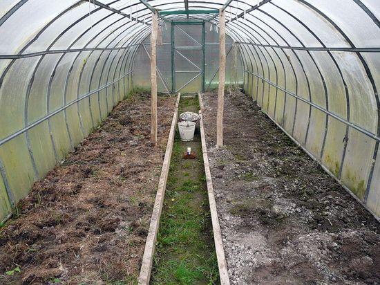 Дезинфекция почвы является обязательной, если ранее выращенные растения, были поражены бактериальными и грибковыми заболеваниями