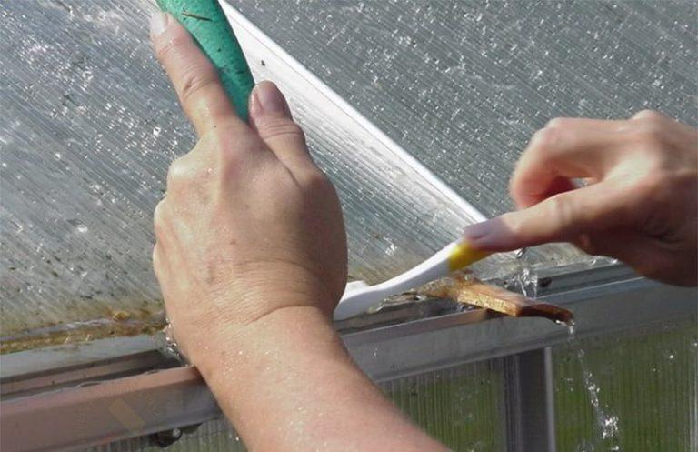 Стены и потолок теплицы также необходимо дезинфицировать: удалить грибки, плесень, грязь