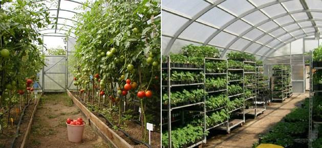 Обращаем ваше внимание, что стеллажи можно использовать для выращивания определенных растений