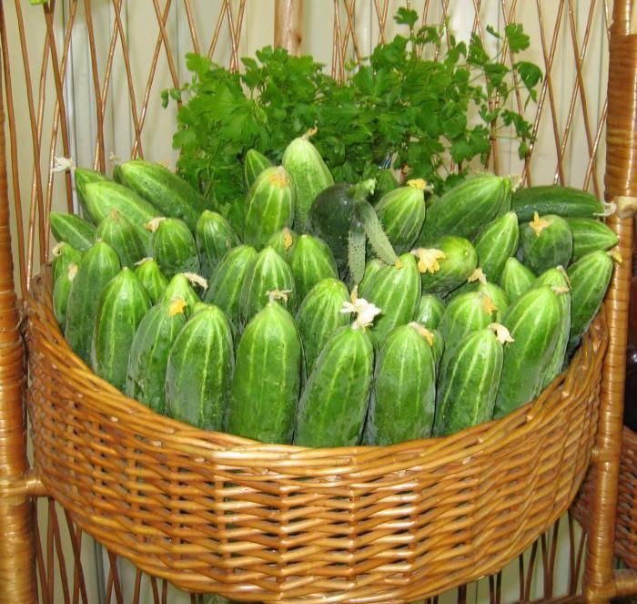 Соблюдение простых правил агротехники позволит собрать богатый, а главное правильной эстетической формы, урожай
