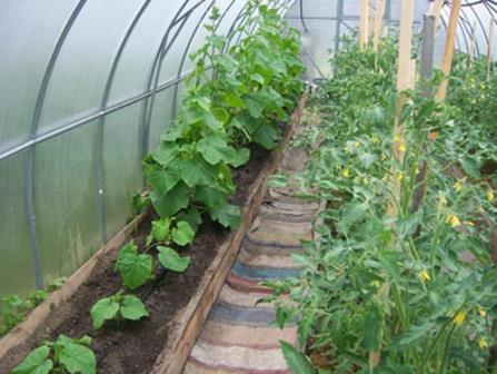 Как посадить в теплицу помидоры и огурцы