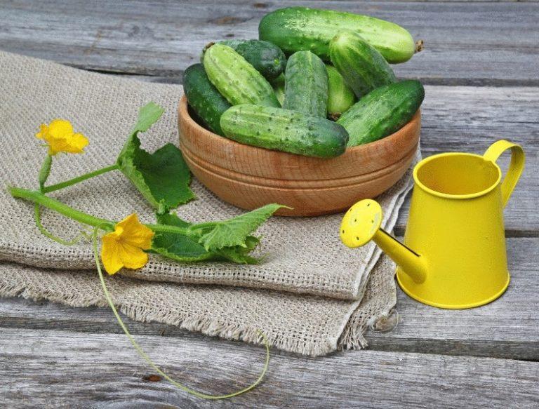 Формируя плети и вовремя пополняя запасы питательных веществ и влаги в почве, можно добиться неплохой отдачи урожая