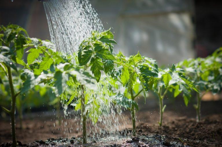 Если обещают слабый морозец в ночное время, то повысить температуру можно влагой. Для этого поливают землю теплой водой