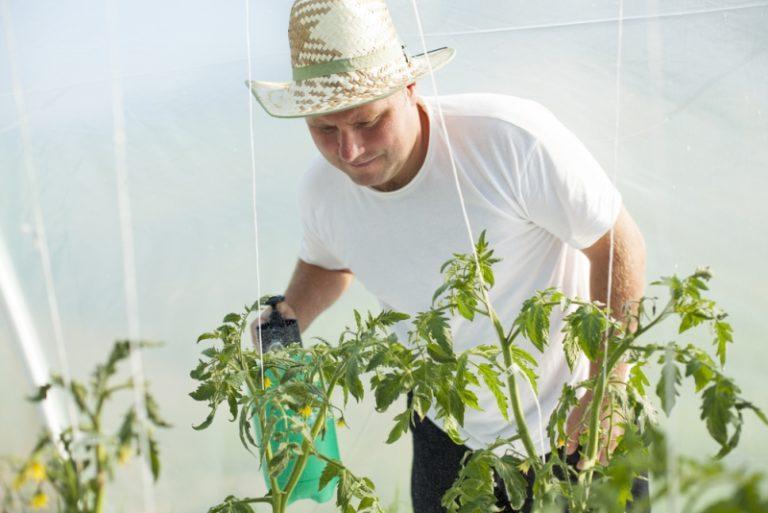 Кроме народных методов борьбы с заболеваниями рассады томатов, существует немало средств, разработанных специалистами