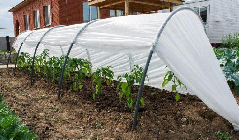 В основном такие переносные парники используют сразу после высадки растений в открытый грунт